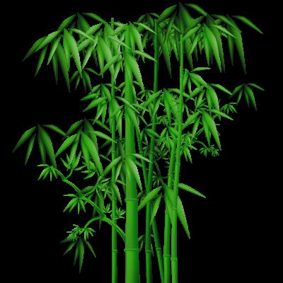 Bamboo BungKung Emeline Moutiez